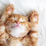 deload week slapende kat